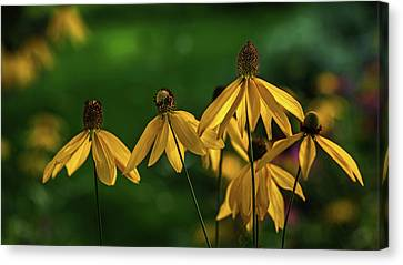 Garden Dancers Canvas Print by Don Spenner