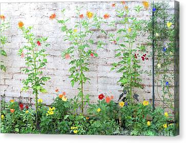 Canvas Print featuring the photograph Garden Florals by Carolyn Dalessandro