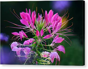 Canvas Print featuring the photograph Garden Magic by Rodney Campbell