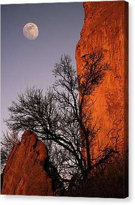 Garden Moon Canvas Print by Darren White