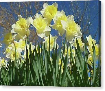 Canvas Print featuring the photograph Garden Of Daffodils by Donna Kennedy