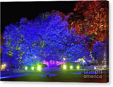 Canvas Print featuring the photograph Garden Of Light By Kaye Menner by Kaye Menner