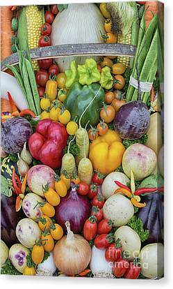 Garden Produce Canvas Print by Tim Gainey