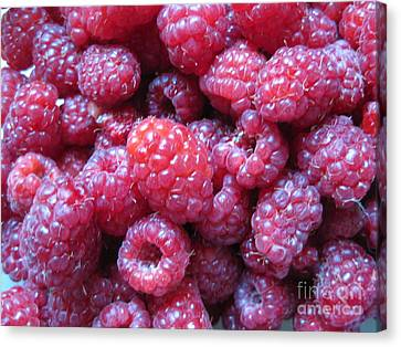 Garden Rasberries Canvas Print by Judy Via-Wolff