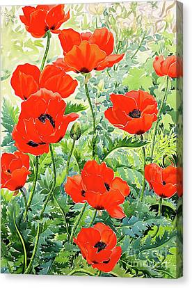 Garden Red Poppies Canvas Print by Christopher Ryland