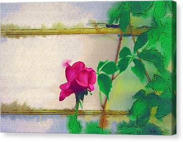 Garden Rose Canvas Print by Holly Ethan
