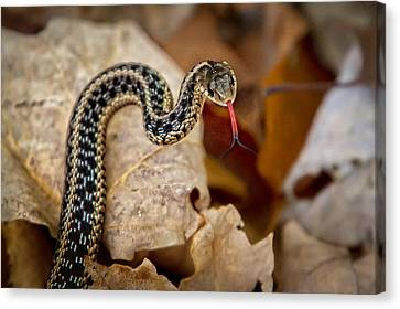 Garden Snake Canvas Print by Eleanor Abramson