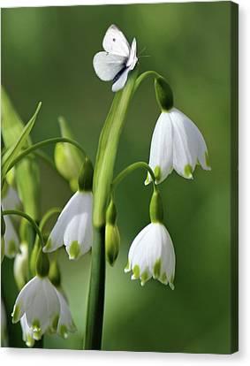 Garden Snowdrops Canvas Print