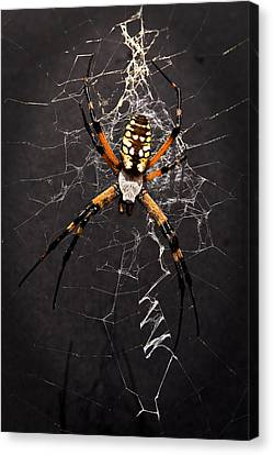 Canvas Print featuring the photograph Garden Spider And Web by Tamyra Ayles