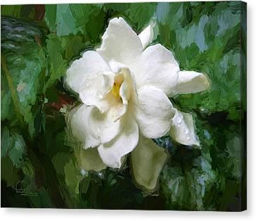 Gardenia Blossom Canvas Print by Ludwig Keck