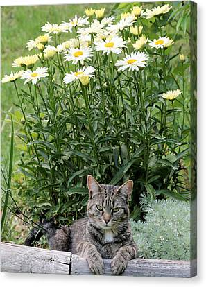 Garfield And Broadway Light Daisies Canvas Print