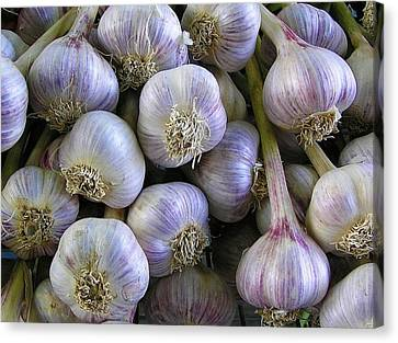 Garlic Bulbs Canvas Print by Jen White