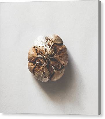 Kitchen Decor - Garlic Canvas Print