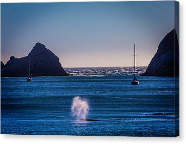 Blowhole Canvas Print - Gary Whale Breaching by Garry Gay