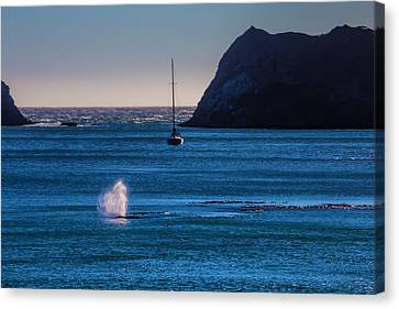 Blowhole Canvas Print - Gary Whale I Blue Water by Garry Gay