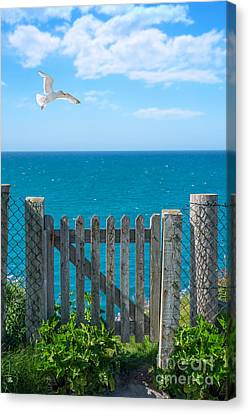 Flying Seagull Canvas Print - Gateway To The Sea by Amanda Elwell