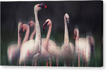 Gathering Canvas Print