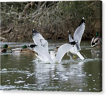 Gathering Of Egrets Canvas Print by George Randy Bass