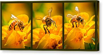 Gathering Pollen Triptych Canvas Print by Bob Orsillo