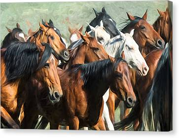 Gathering The Herd Canvas Print