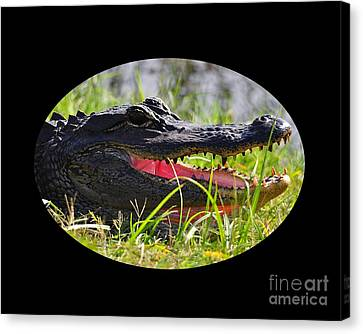 Gator Grin .png Canvas Print by Al Powell Photography USA