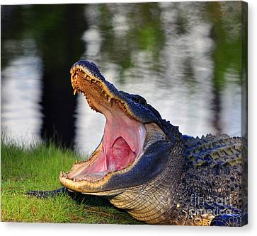 Canvas Print featuring the photograph Gator Gullet by Al Powell Photography USA