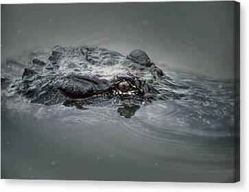 Gator Head  Canvas Print by Alicia Morales