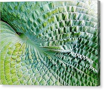 Gator Hosta Canvas Print