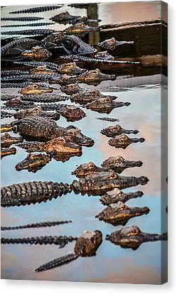 Gator Pack Canvas Print by Josy Cue