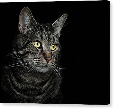 Pet Canvas Print - Gaze  by Paul Neville