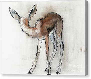 Gazelle Fawn  Arabian Gazelle Canvas Print by Mark Adlington