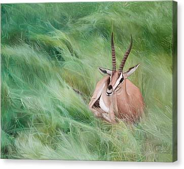 Gazelle In The Grass Canvas Print by Joshua Martin