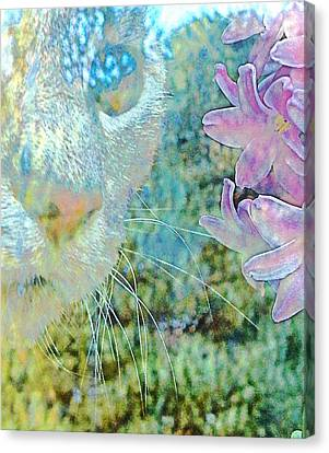 Gazing Out Canvas Print by Dorothy Berry-Lound