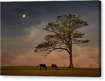 Gazing Peacefully Canvas Print by Nancy Rose