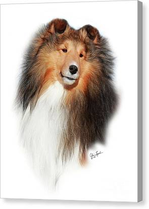Shetland Sheepdog Canvas Print - Gch Mystique Wikked Pursuit-1 by Chris Lynch