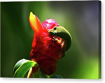 Canvas Print featuring the photograph Gecko #1 by Anthony Jones