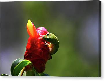 Canvas Print featuring the photograph Gecko #2 by Anthony Jones