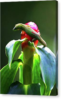 Canvas Print featuring the photograph Gecko #3 by Anthony Jones