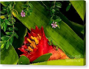 Gecko Aloha All Proceeds Go To Hospice Of The Calumet Area Canvas Print