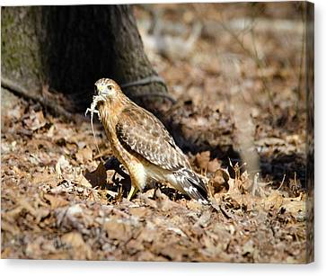 Canvas Print featuring the photograph Gecko For Lunch by George Randy Bass