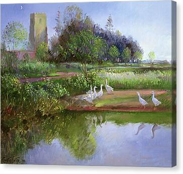 Geese At Sundown Canvas Print by Timothy Easton