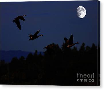 Geese Dancing In The Moon Canvas Print by Wingsdomain Art and Photography