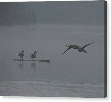 Geese In The Morning Fog Canvas Print