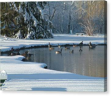 Geese On Pond Canvas Print by Gregory Jeffries