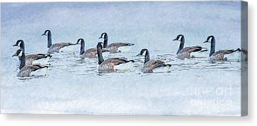 Geese Canvas Print - Geese On Pond by Randy Steele
