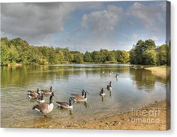 Geese On The Lake Hdr Canvas Print