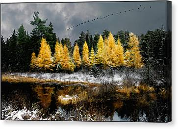 Canvas Print featuring the photograph Geese Over Tamarack by Wayne King