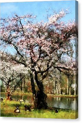 Geese Under Flowering Tree Canvas Print by Susan Savad