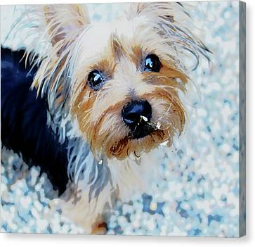 Gema Painted Canvas Print by Clyde Dellinger