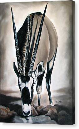 Gemsbok - Thirst Canvas Print by Ilse Kleyn